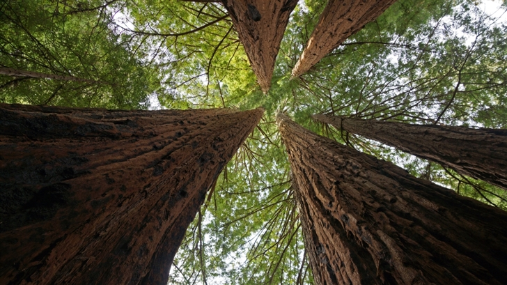 Big Basin Redwoods State Park Mac Wallpaper