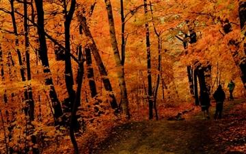 Fall Jogging Mac wallpaper