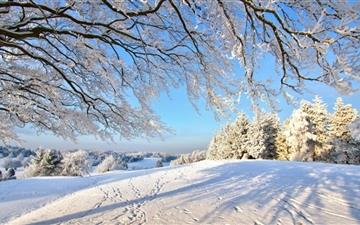Trails In The Snow Mac wallpaper