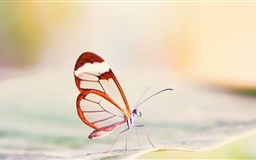 Transparent Wings Butterfly Mac wallpaper