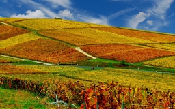 Vineyards Autumn Mac wallpaper