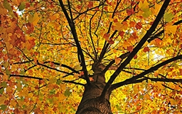 Yellow Tree Mac wallpaper