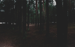 The Forest Mac wallpaper