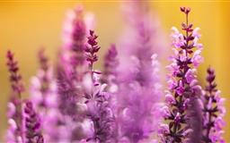 Purple Flower Mac wallpaper