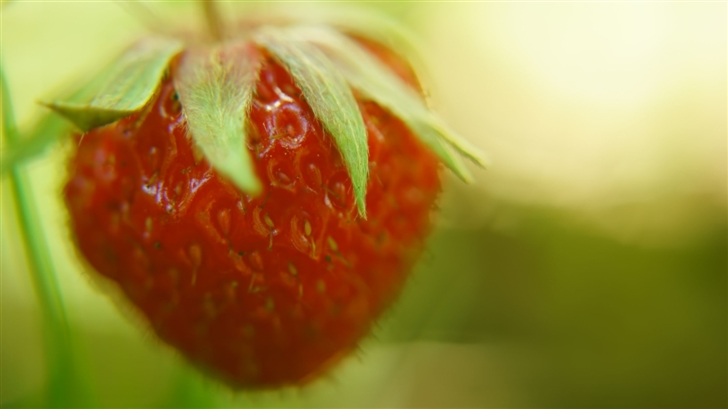 The Strawberry Mac Wallpaper