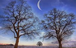 Trees Under New Moon Winter Mac wallpaper