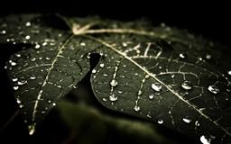 Leaf Droplets Mac wallpaper