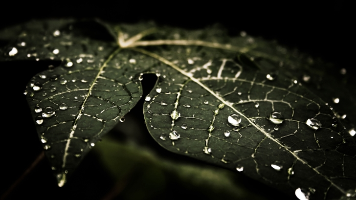 Leaf Droplets Mac Wallpaper