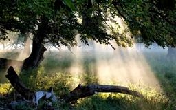 Sunlight Through Tree Mac wallpaper
