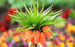 Amazing Flower Bokeh Mac wallpaper
