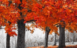 Autumn Series Mac wallpaper