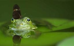 Butterfly On A Frog Mac wallpaper