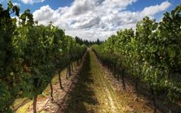 The Wines Of New Zealand Mac wallpaper