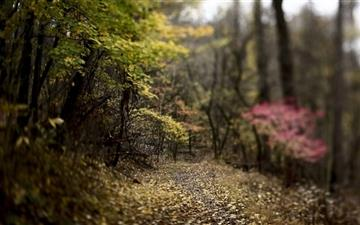 Forest Footpath Mac wallpaper