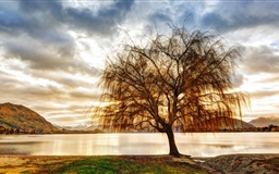Lonely Tree Mac wallpaper