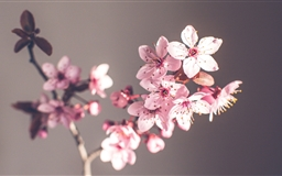 Pink Spring Flowers Mac wallpaper