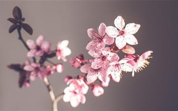 Pink Spring Flowers Mac wallpaper