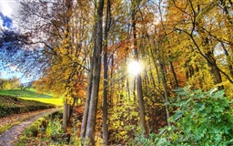Sunlighted Forest Mac wallpaper