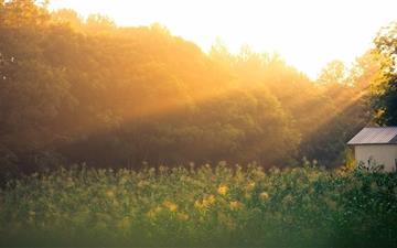 Field Of Corn At Sunrise Mac wallpaper