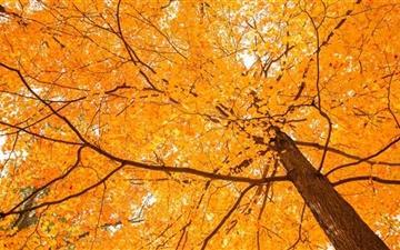 Forest In Autumn Mac wallpaper