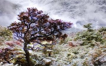 Patagonia Tree Mac wallpaper