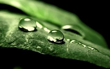 Wet Green Leaf Macro Mac wallpaper