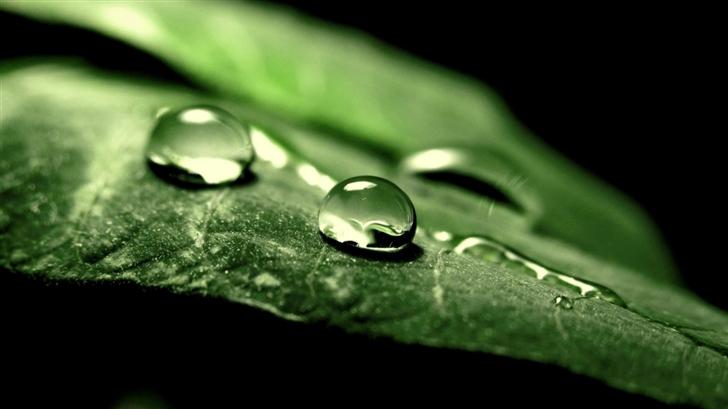 Wet Green Leaf Macro Mac Wallpaper