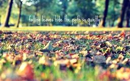 Falling Leaves Hide The Path Mac wallpaper