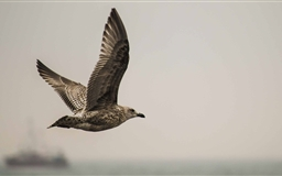 The Seagull Mac wallpaper