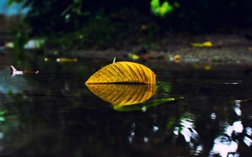 Yellow Leaf On Water Mac wallpaper