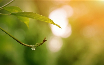 Dew Drop Mac wallpaper
