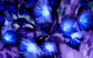 Glowing Flowers Inspired By Avatar Mac wallpaper