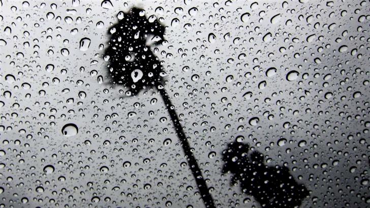 Palm Trees In The Rain Mac Wallpaper