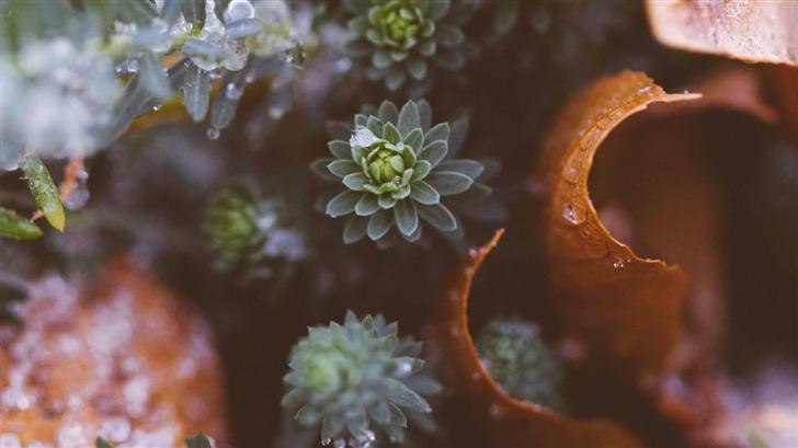 Plants Nature Mac Wallpaper