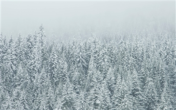 Snow covered tree landscape Mac wallpaper