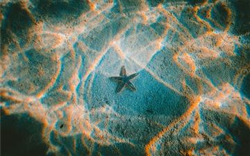 Starfish Mac wallpaper