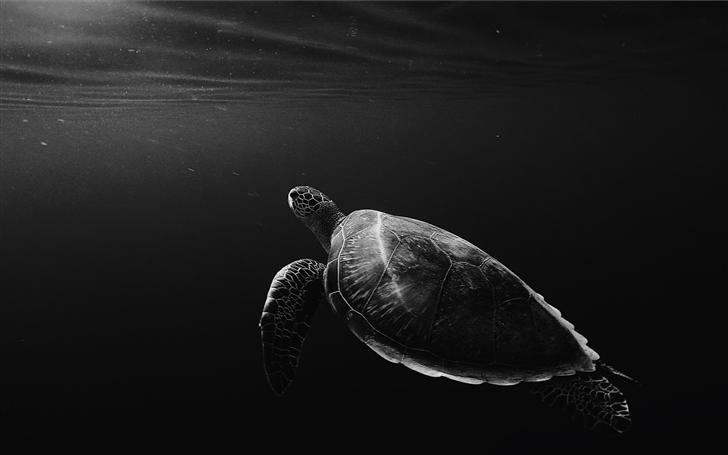 monochrome lone turtle in sea Mac Wallpaper