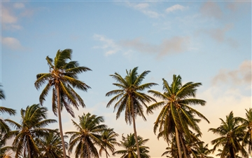 summer palm tree paradise Mac wallpaper