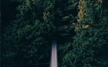 Suspension bridge in a fo... Mac wallpaper