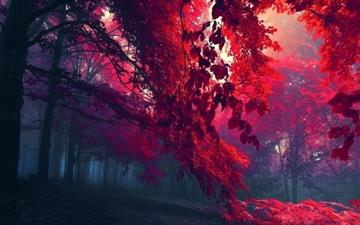 Red Forest Mac wallpaper