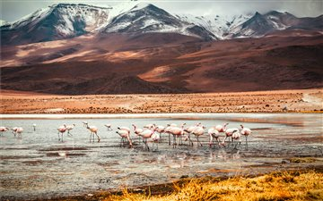 Flamingo Lake of Bolivia Mac wallpaper