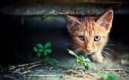Red Kitten Hide Seek