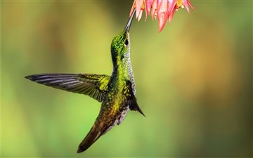 Andean Emerald Mac wallpaper