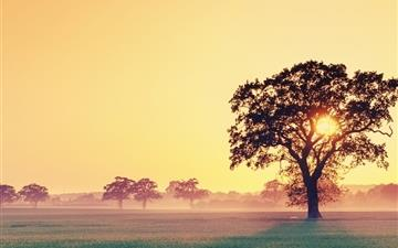 Sunlight through the trees Mac wallpaper