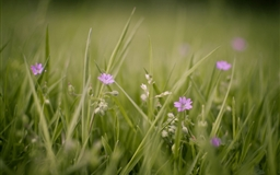 Meadow And Flowers Mac wallpaper