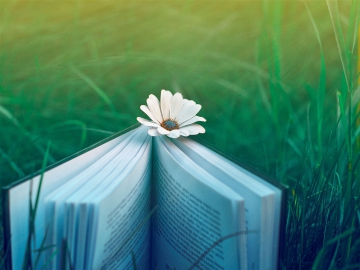 Field Book Flower Grass Mac Wallpaper
