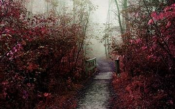 Autumn Mist Path Mac wallpaper