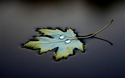 Water Leaf Drops