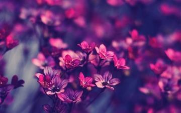 Purple wildflowers Mac wallpaper
