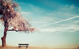 Bench chairs cherry bols